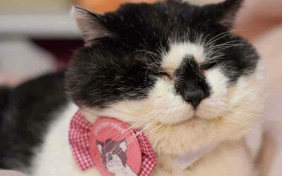 Příběhy z kočičí kapsy: Oreo