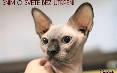 Příběhy z kočičí kapsy: Purpur
