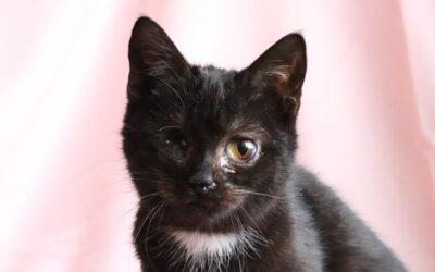 Příběhy z kočičí kapsy: Růženka