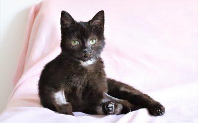 Příběhy z kočičí kapsy: Pomněnka
