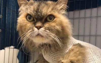 Příběhy z kočičí kapsy: Sára