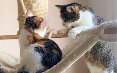 Příběhy z kočičí kapsy: Moody
